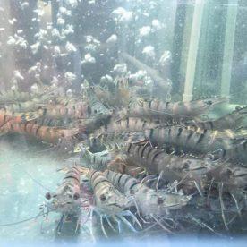 Một vòng dạo quanh chợ hải sản Vườn Bia Hà Nội